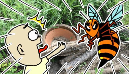 ハチに刺されたときにやってはいけない対処法3つを全部やってみた